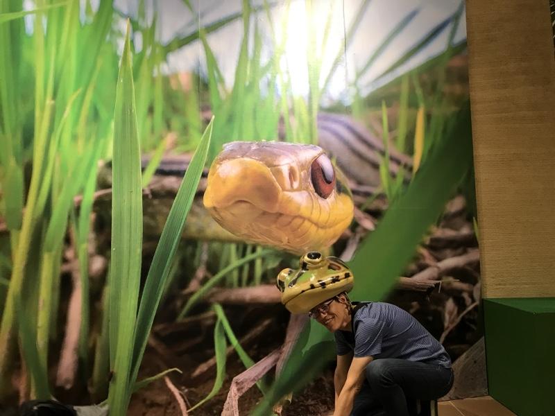 ヘビに睨まれたカエル(^◇^;)